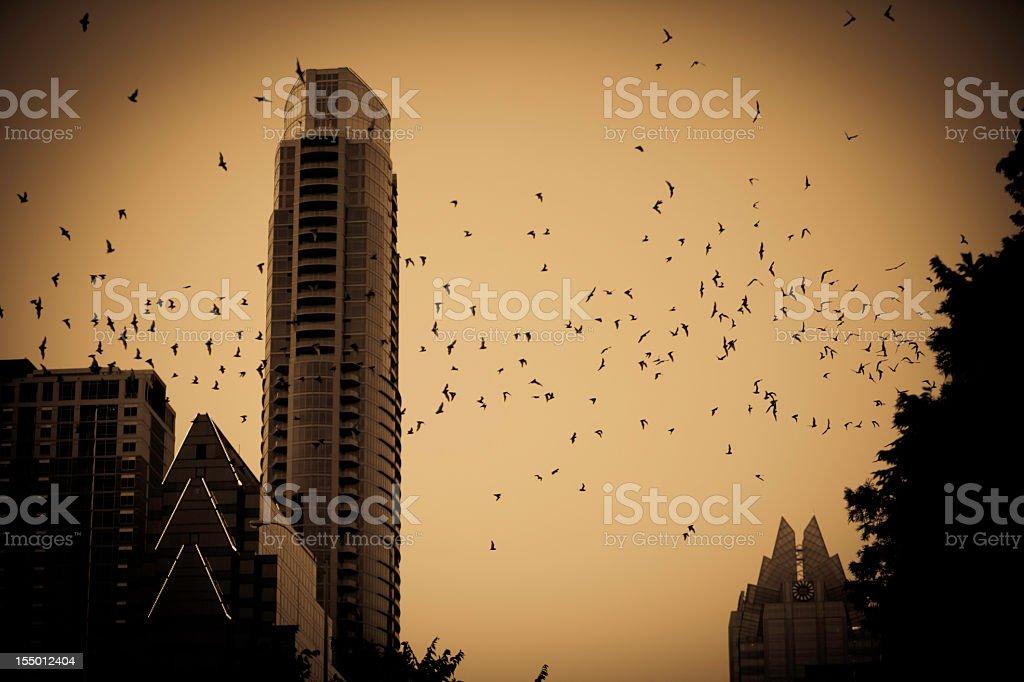 Halloween - Free-tail bats Austin Texas stock photo