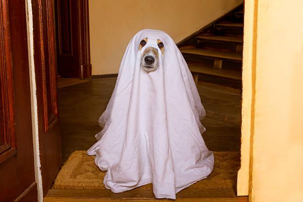 halloween  ghost  dog trick or treat - geist kostüm stock-fotos und bilder