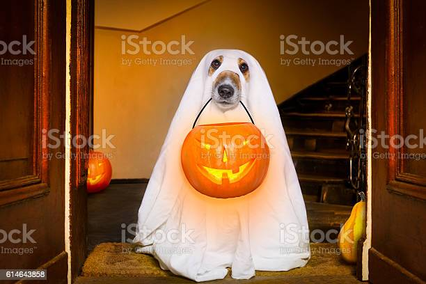 Halloween ghost dog trick or treat picture id614643858?b=1&k=6&m=614643858&s=612x612&h=h8johmmtxhvm04llmsuggtyslfjldx d1oholeummfq=