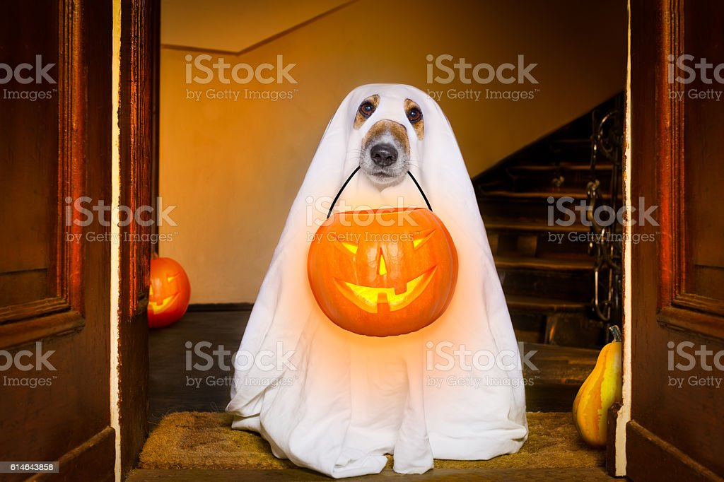 halloween  ghost  dog trick or treat - foto stock