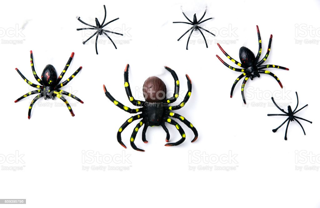 Grupo de conceito de férias Halloween de aranha caminhar na teia de aranha sobre fundo branco. Pronto para montagem de exposição de produto. - foto de acervo