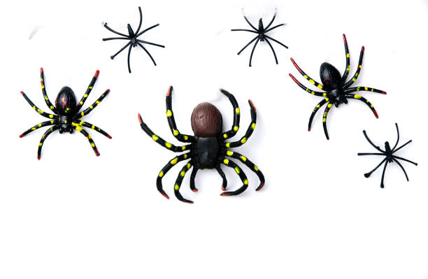 Grupo de concepto de fiesta de Halloween de la araña camina en telaraña sobre fondo blanco. Listo para el montaje de exhibición de producto. - foto de stock