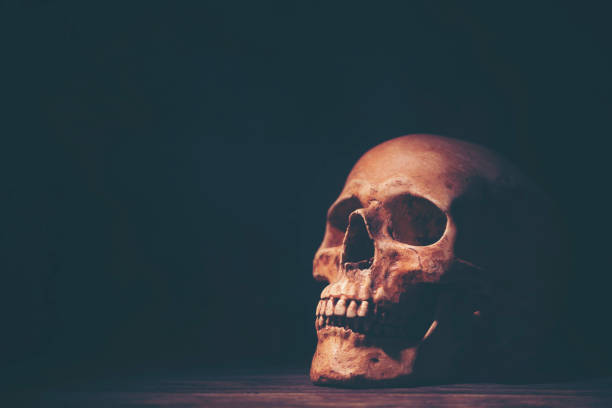 Halloween Human Skull Halloween Human Skull human skull stock pictures, royalty-free photos & images