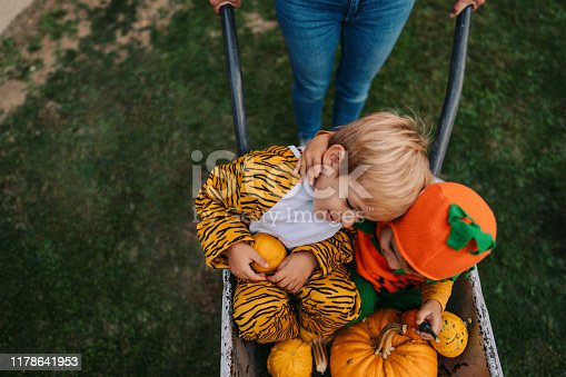 Photo of two boys costumed as a pumpkin and tiger, having a ride in a pushcart, on Halloween