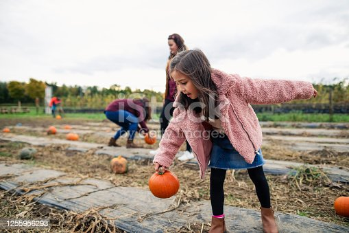 Young girl pumpkin picking at a farm in Autumn dressed in warm clothes getting ready for halloween. She is picking up a pumpkin from the ground.