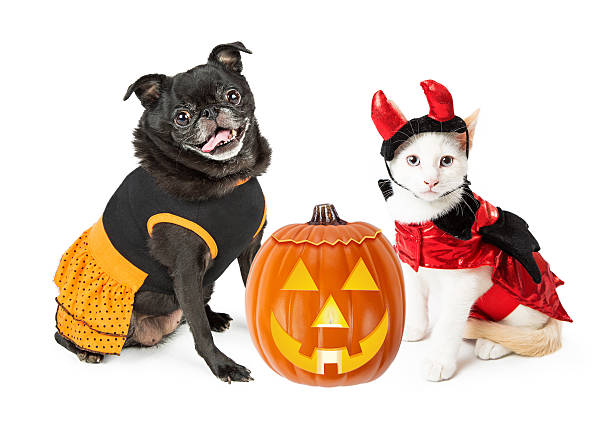 Halloween Kitten and Dog With Pumpkin Cute happy dog and kitten wearing Halloween costumes with jack-o-lantern pet clothing stock pictures, royalty-free photos & images