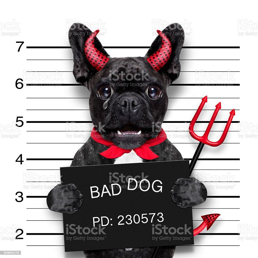 halloween  mugshot dog stock photo