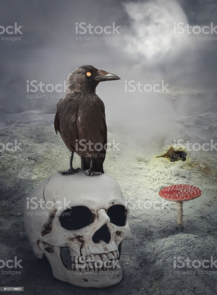 Halloween mystical background with crow on skull stock photo