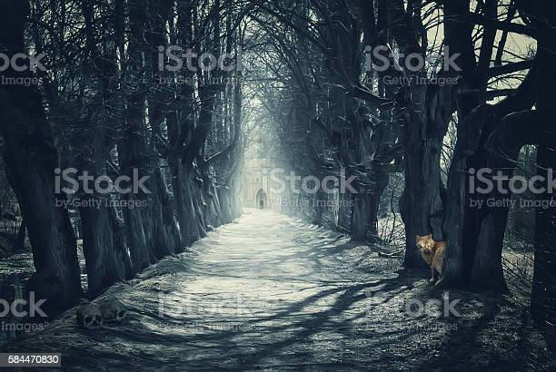 Halloween mystical background with dark forest picture id584470830?b=1&k=6&m=584470830&s=612x612&h=kcmqb4xotjgbmmseufer fq0ctaop8fzspmunthucu8=
