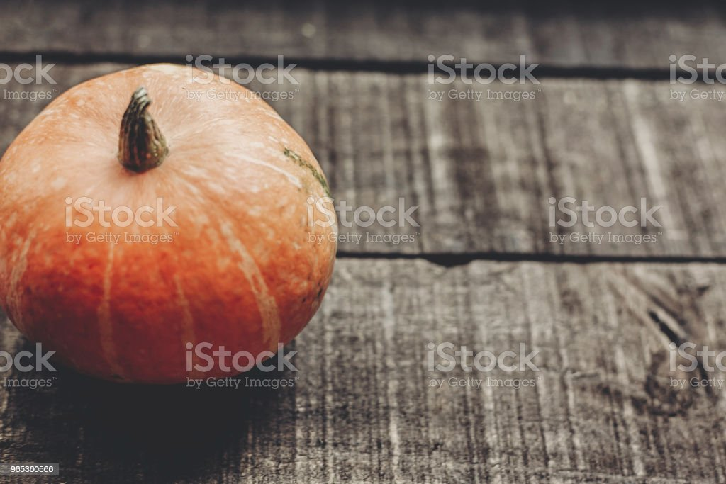 halloween or thanksgiving concept greeting card. beautiful pumpkin on rustic wooden background, top view. space for text. cozy autumn mood. fall holiday. stylish simple image zbiór zdjęć royalty-free