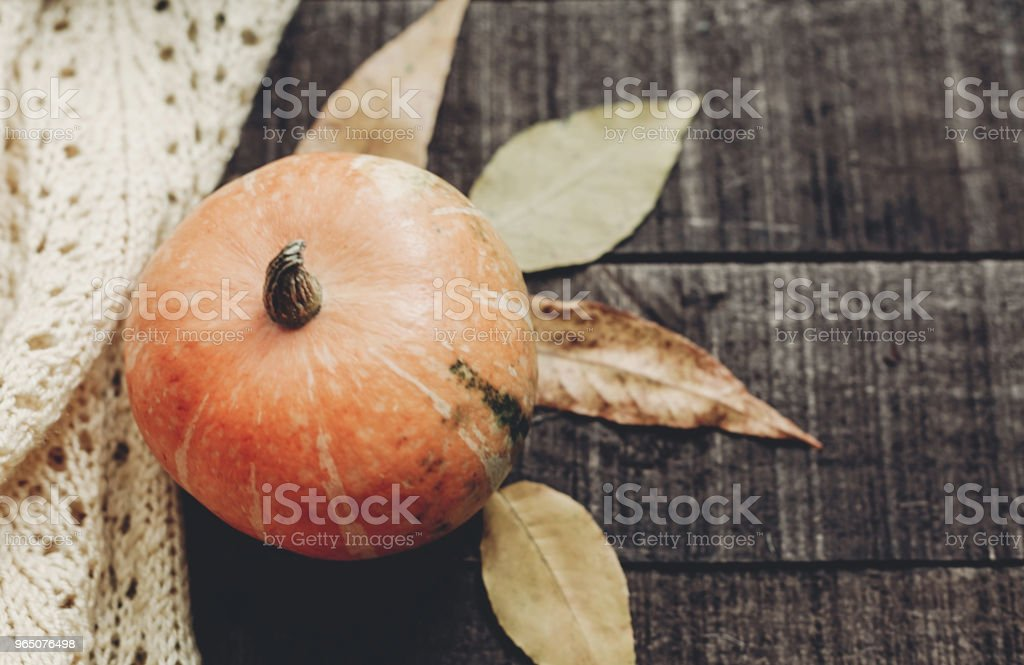 halloween or thanksgiving concept greeting card fall flat lay. beautiful pumpkin on knitted sweater with leaves on rustic wooden background, top view. space for text.  cozy autumn mood. holiday zbiór zdjęć royalty-free