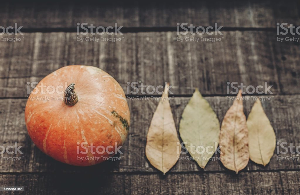 halloween or thanksgiving concept greeting card fall flat lay. beautiful pumpkin with leaves on rustic wooden background, top view. space for text.  cozy autumn mood. holiday. simple image royalty-free stock photo