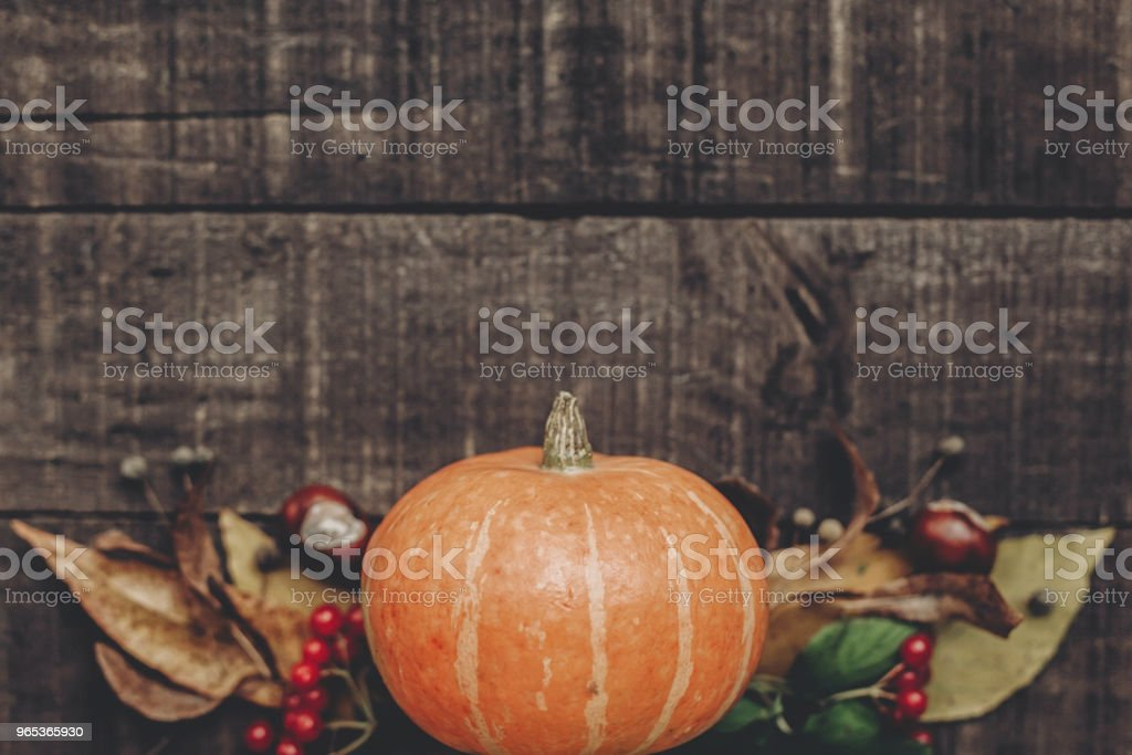 halloween  or thanksgiving concept greeting card flat lay. beautiful pumpkin with leaves and berries on rustic wooden background, top view. space for text. cozy autumn mood. fall holiday royalty-free stock photo