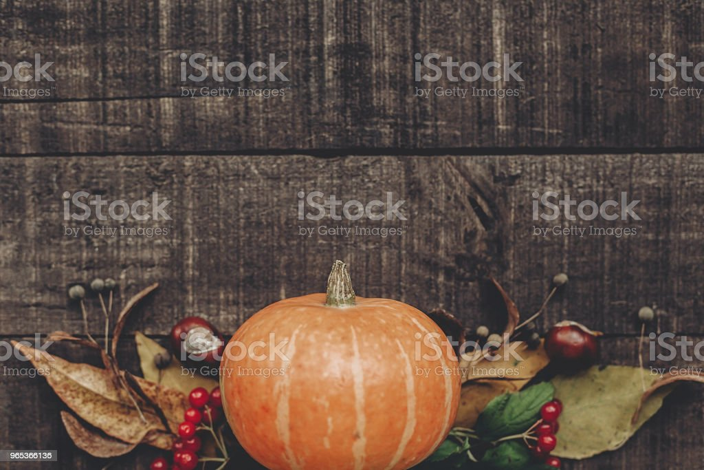 halloween  or thanksgiving concept greeting card flat lay. beautiful pumpkin with leaves and berries on rustic wooden background, top view. space for text. cozy autumn mood. fall holiday zbiór zdjęć royalty-free
