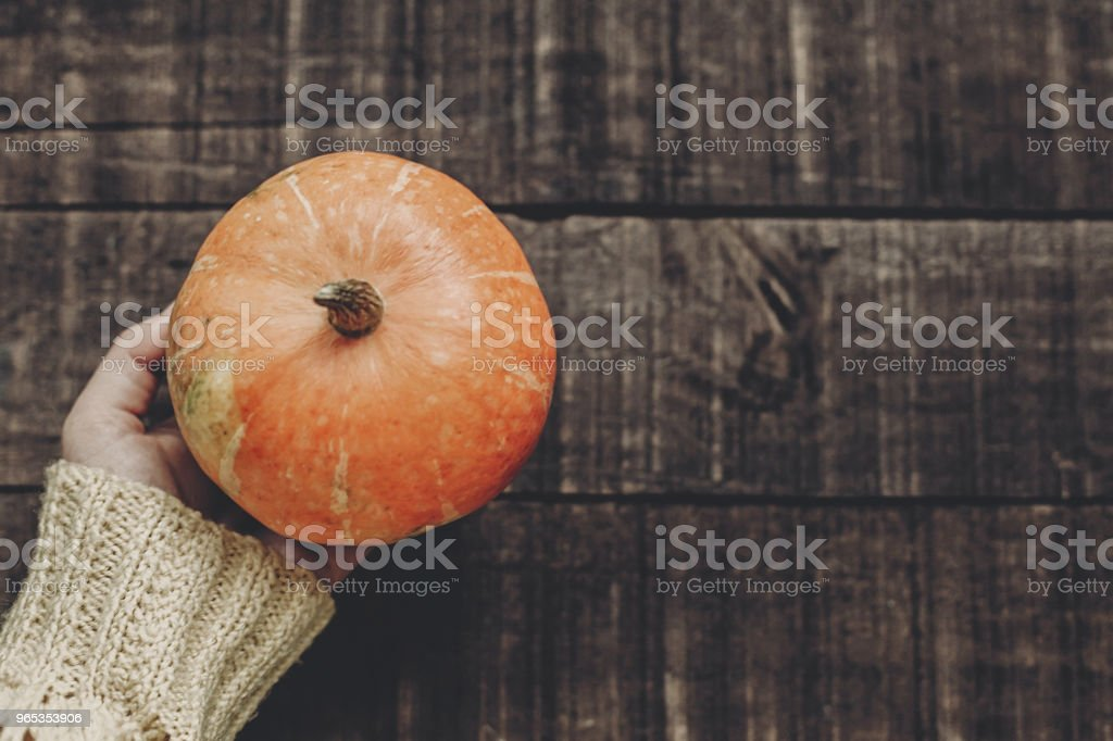 halloween or thanksgiving  concept greeting card. hand in sweater holding pumpkin on rustic wooden background, top view. space for text. cozy autumn mood. fall holiday. stylish image zbiór zdjęć royalty-free