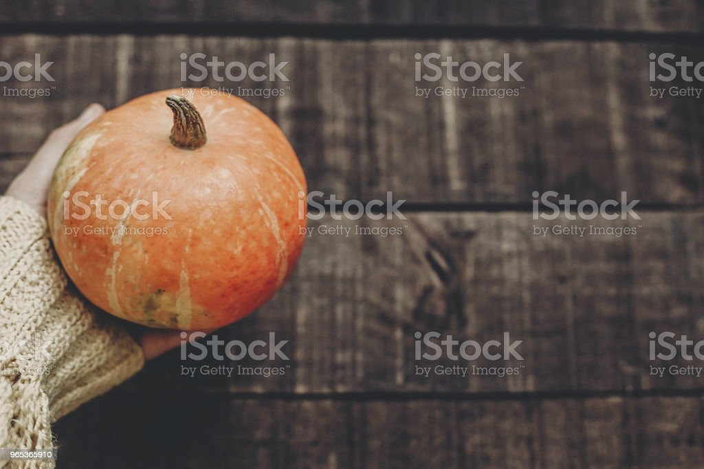 halloween or thanksgiving  concept greeting card. hand in sweater holding pumpkin on rustic wooden background, top view. space for text. cozy autumn mood. fall holiday. stylish image royalty-free stock photo