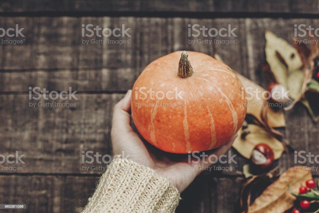 carte de voeux Halloween ou thanksgiving concept. main en pull tenue citrouille avec feuilles et baies sur fond en bois rustique, vue de dessus. espace pour le texte. chaleureuse ambiance automne - Photo de Aliment libre de droits