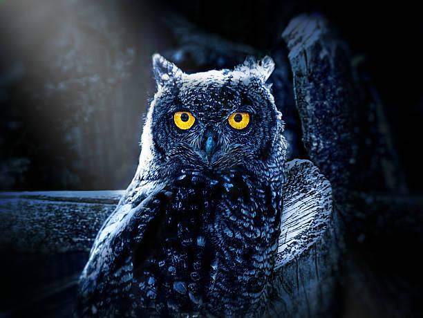Halloween owl picture id187273483?b=1&k=6&m=187273483&s=612x612&w=0&h=5rbdat40hr1mhjiywl0npbnwffrykwujsgpeuvu38 w=