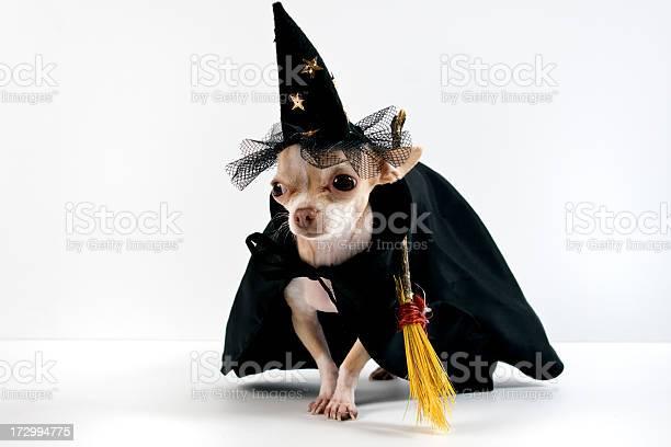 Halloween picture id172994775?b=1&k=6&m=172994775&s=612x612&h=mzf9t32ps 4nznbnnwt dt1n1o0jd2o0qcwwdrecjbi=
