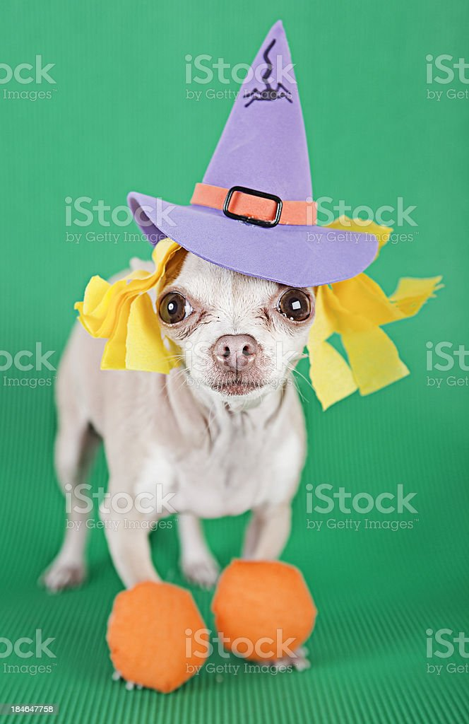 halloween royalty-free stock photo