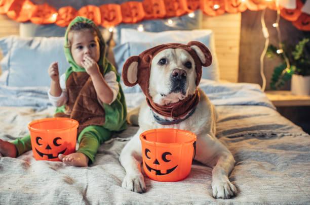 die halloween - kleine jungen kostüme stock-fotos und bilder