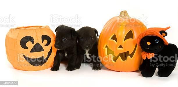 Halloween picture id94926577?b=1&k=6&m=94926577&s=612x612&h=lfje8jzywlmowzb1uib6xzmyq1sycne1okas6ihgtyc=