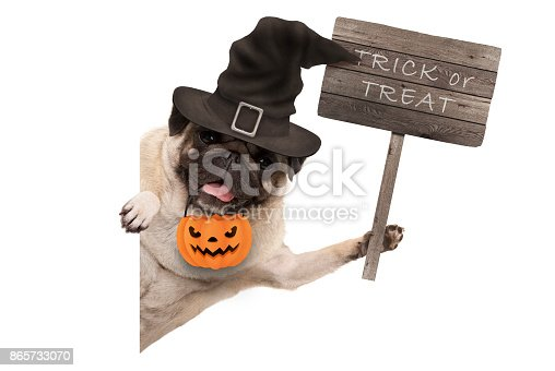 istock Halloween pug puppy dog holding up wooden sign with text trick or treat, wearing witch hat and pumpkin basket 865733070