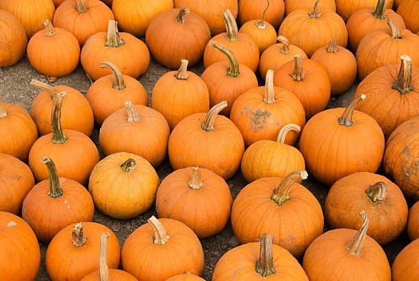 Halloween Pumkins stock photo