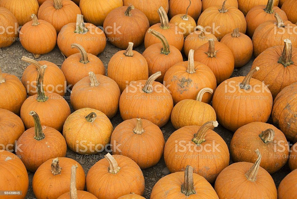 Halloween Pumkins stock photo