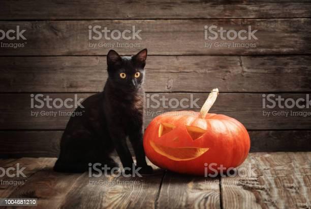 Halloween pumpkin and black cat on wooden background picture id1004681210?b=1&k=6&m=1004681210&s=612x612&h=v9gemwft bpo9mkp0vxa6uzu7kchhmghnnv3kupxlau=
