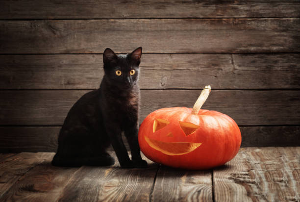 Halloween pumpkin and black cat on wooden background picture id1004681210?b=1&k=6&m=1004681210&s=612x612&w=0&h=ckwwb6rwxrkko0iwdsf4hkjau 4ktid5sxinmulbnwu=