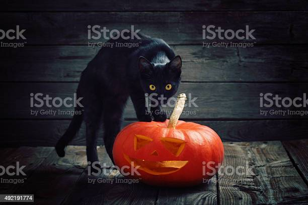 Halloween pumpkin and black cat on wooden background picture id492191774?b=1&k=6&m=492191774&s=612x612&h=9p10tzy9jgyzr7qvaa 3cuggllueggvyedvna6btwbs=