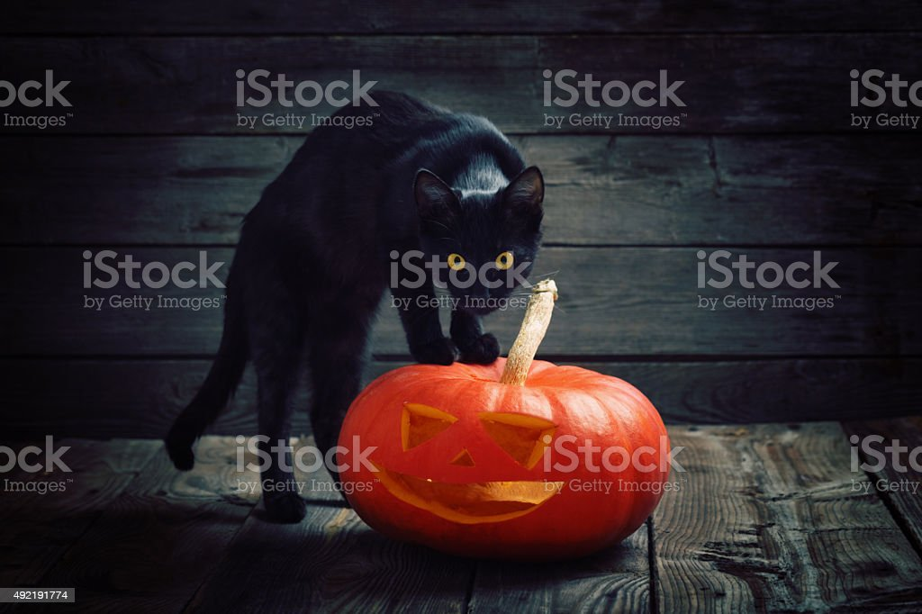 Halloween pumpkin and black cat on wooden background stock photo
