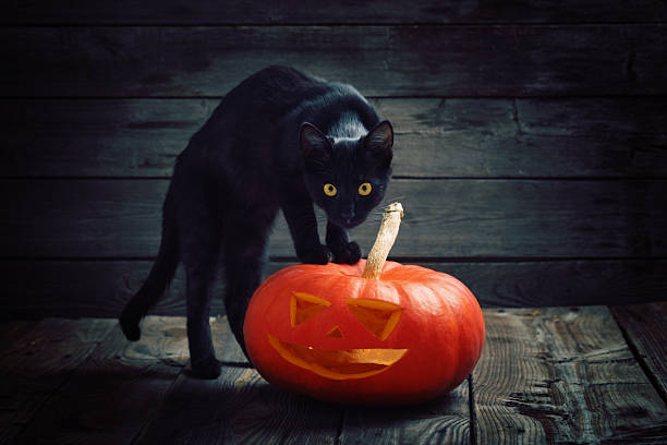 Halloween pumpkin and black cat on wooden background Halloween pumpkin and black cat on wooden background halloween cat stock pictures, royalty-free photos & images