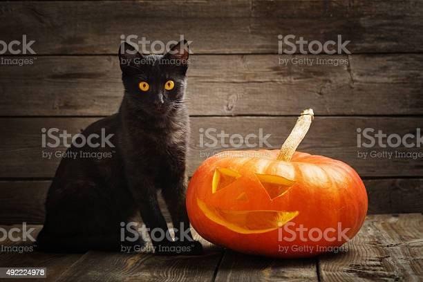 Halloween pumpkin and black cat on wooden background picture id492224978?b=1&k=6&m=492224978&s=612x612&h=wa po1gzmm8w  fjyai29ejhis4jvjfb1zjk3twdm3k=