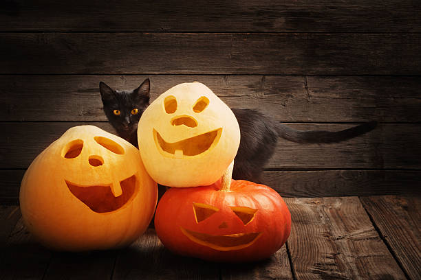 Halloween pumpkin and black cat on wooden background picture id589973076?b=1&k=6&m=589973076&s=612x612&w=0&h=b yp7nsbcxe8siwu1 ff2 k269zm4x8q2rncbautnyk=