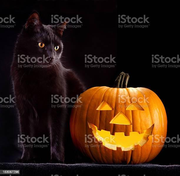 Halloween pumpkin and cat picture id153067296?b=1&k=6&m=153067296&s=612x612&h=nmavrvgxwt dsqfpipohwcalg3hcxlcmtlnclz2dmui=