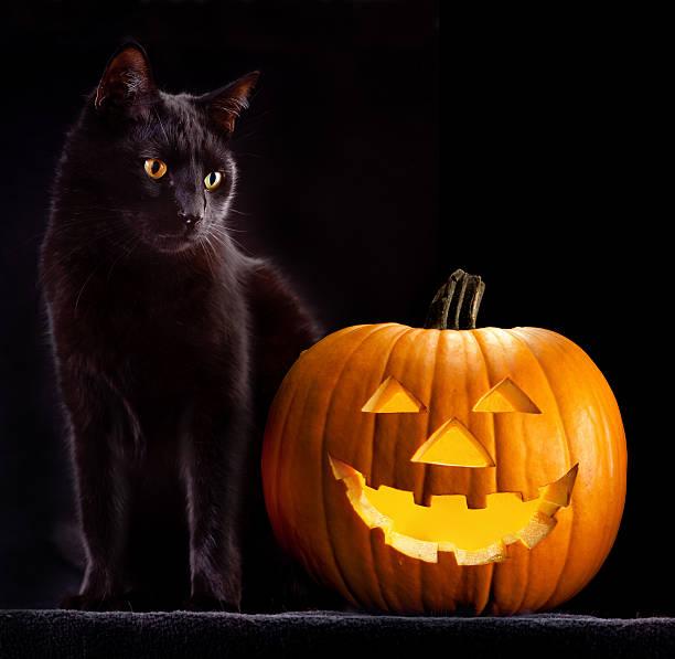 Halloween pumpkin and cat picture id153067296?b=1&k=6&m=153067296&s=612x612&w=0&h=igiezsrxxow98tpwqq8 3uuisgsbae9zhzy7vher bk=