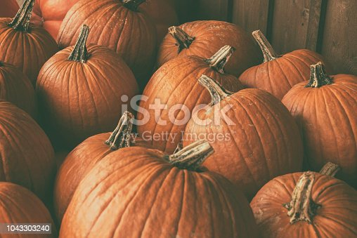 Halloween pile of pumpkins at a pumpkin patch.
