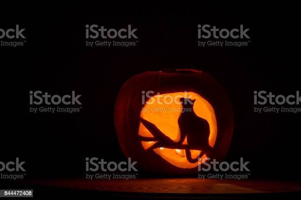 Halloween pumpkin cat picture id844472408?b=1&k=6&m=844472408&s=612x612&h=namicc6yrenj ydxn0h2 s2pjjwpx1iez0inmvojcko=