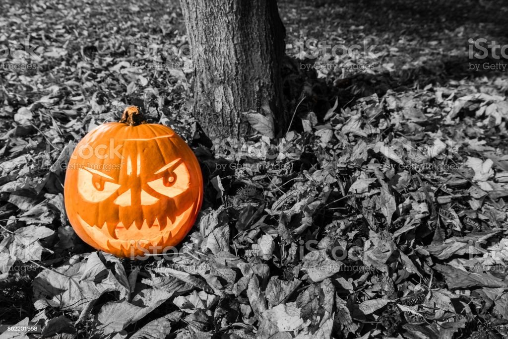 Halloween pumpkin on the ground with leaves and tree trunk stock photo
