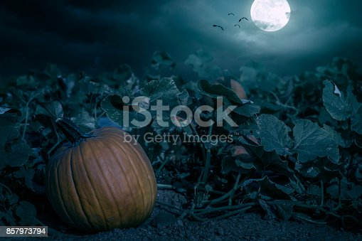 A Halloween pumpkin patch at night under a full moon with vampire bats in the night sky.