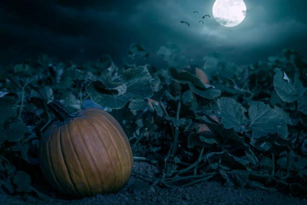 halloween-pumpkin-patch-night-spooky-background-picture-id857973794?k=6&m=857973794&s=612x612&w=0&h=TeT9rZUsCecJ-fTVYYa0AcYceVuqgFD3a4eFB5bWCAY=