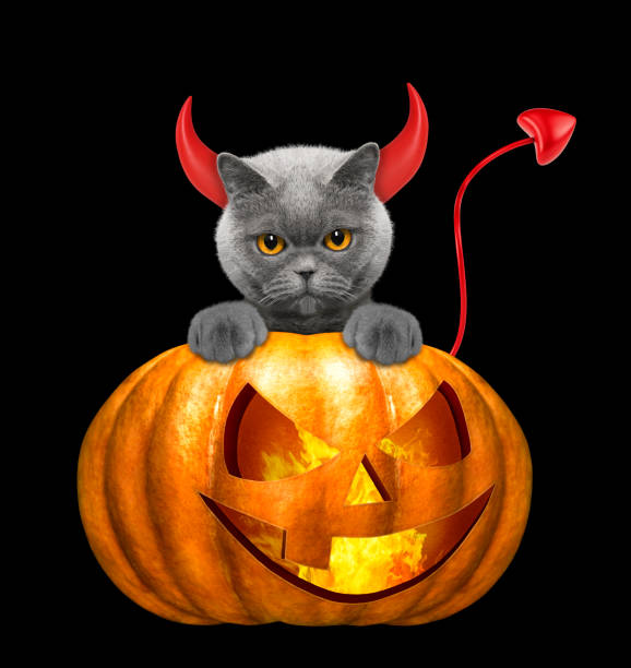 Halloween pumpkin with cute cat isolated on black picture id846997348?b=1&k=6&m=846997348&s=612x612&w=0&h=rmmqka7 l16ezzhbtnrthc0eerd68wnicbi6efxx038=