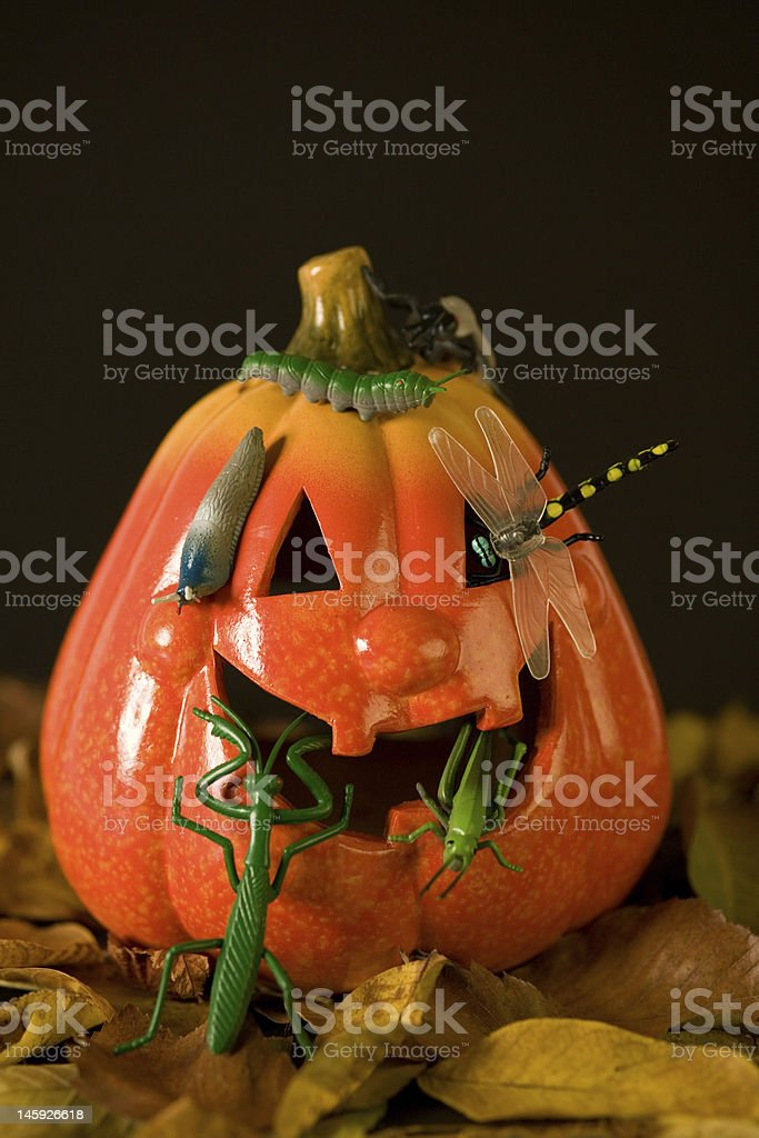 halloween pumpkins and bugs royalty-free stock photo