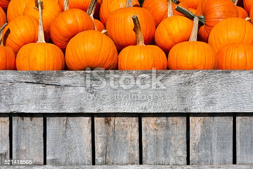 A lot of orange colored pumpkins in a wooden box, and ready for pumpkin cakes, pie, decoration for Halloween.