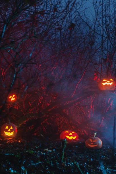 Halloween pumpkins in night forest stock photo