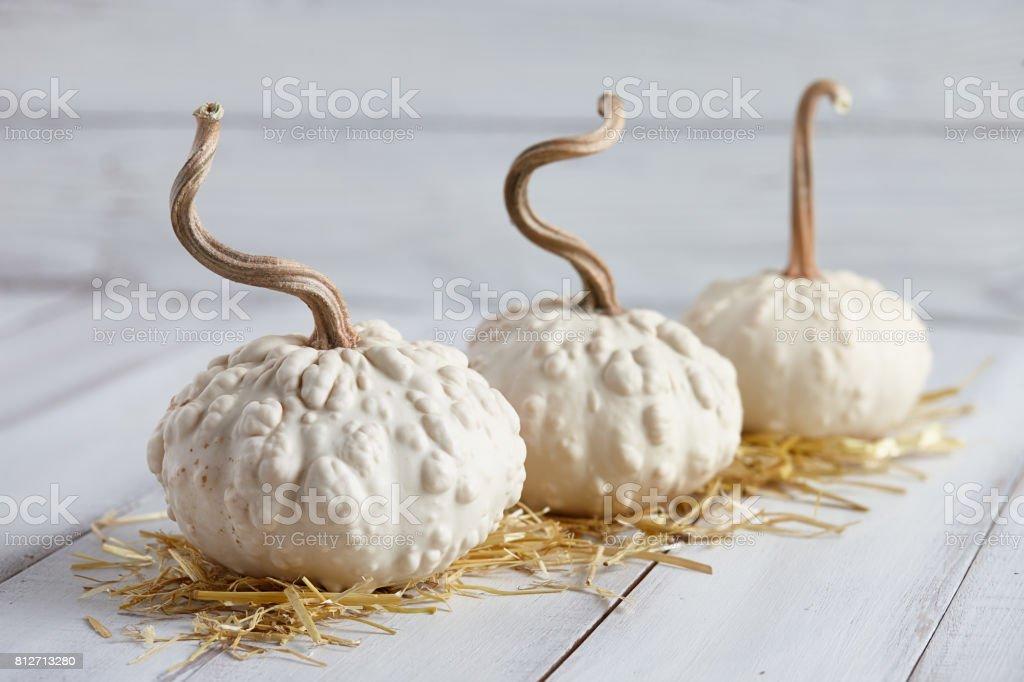 Halloween pumpkins on white planks stock photo