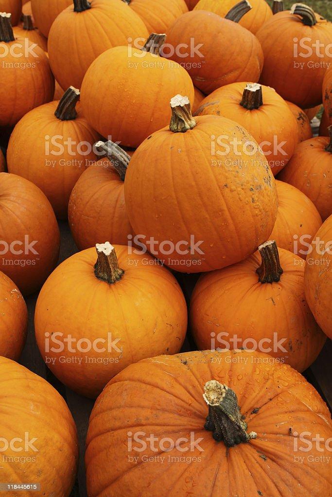 Halloween Pumpkins royalty-free stock photo
