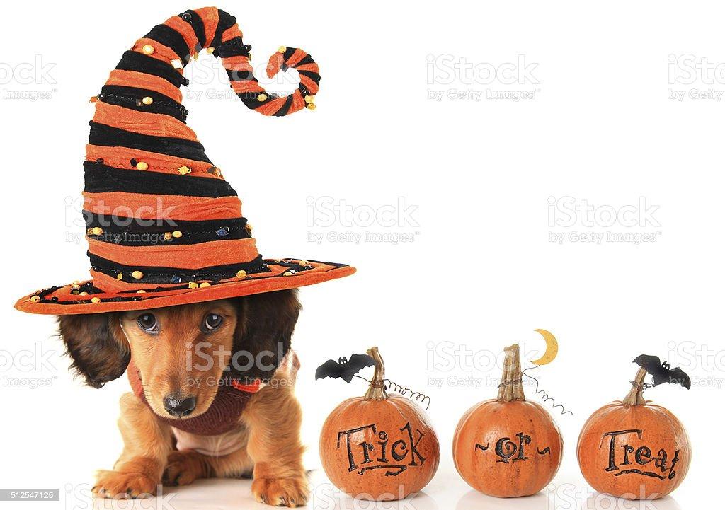 Halloween puppy stock photo
